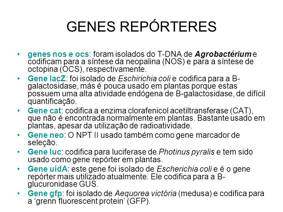 GENES REPÓRTERES