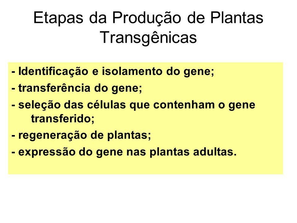 Etapas da Produção de Plantas Transgênicas