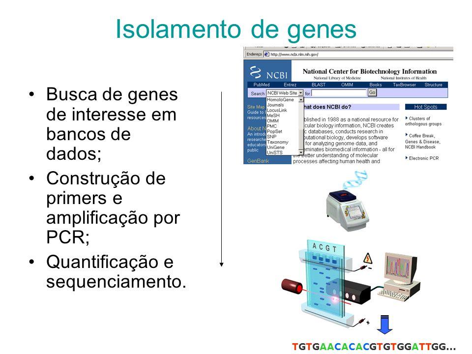 Isolamento de genes Busca de genes de interesse em bancos de dados;