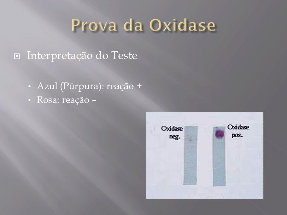 Prova da Oxidase Interpretação do Teste Azul (Púrpura): reação +