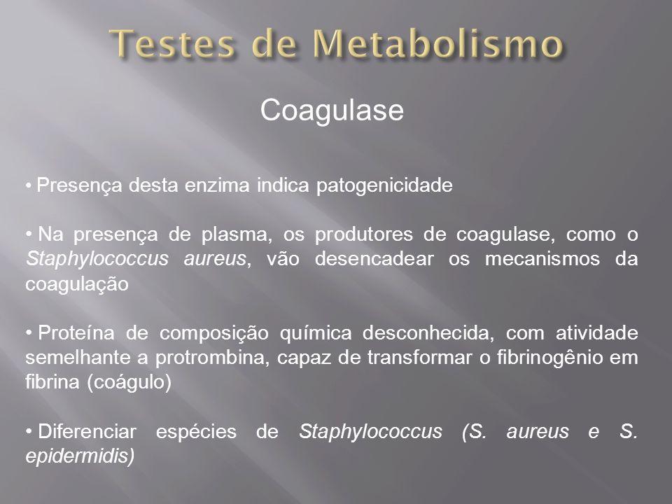Testes de Metabolismo Coagulase