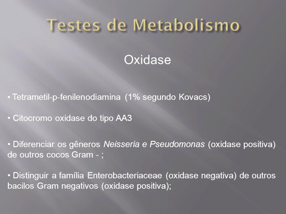 Testes de Metabolismo Oxidase Citocromo oxidase do tipo AA3