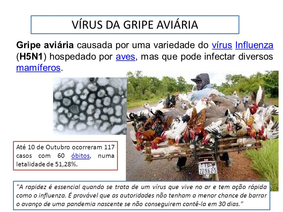 VÍRUS DA GRIPE AVIÁRIA