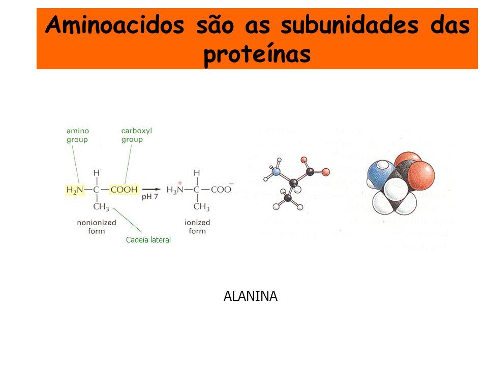 Aminoacidos são as subunidades das proteínas