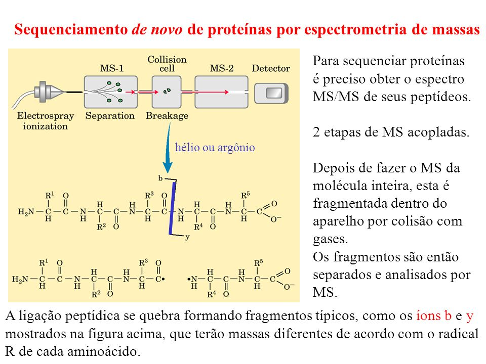 Sequenciamento de novo de proteínas por espectrometria de massas