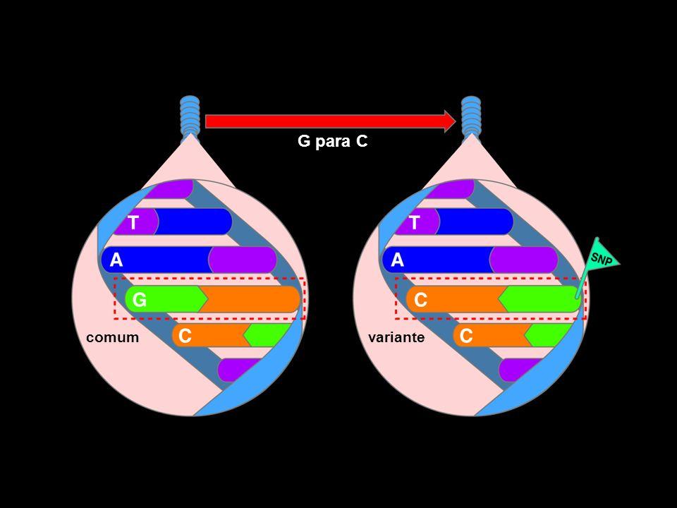 comum G para C variante