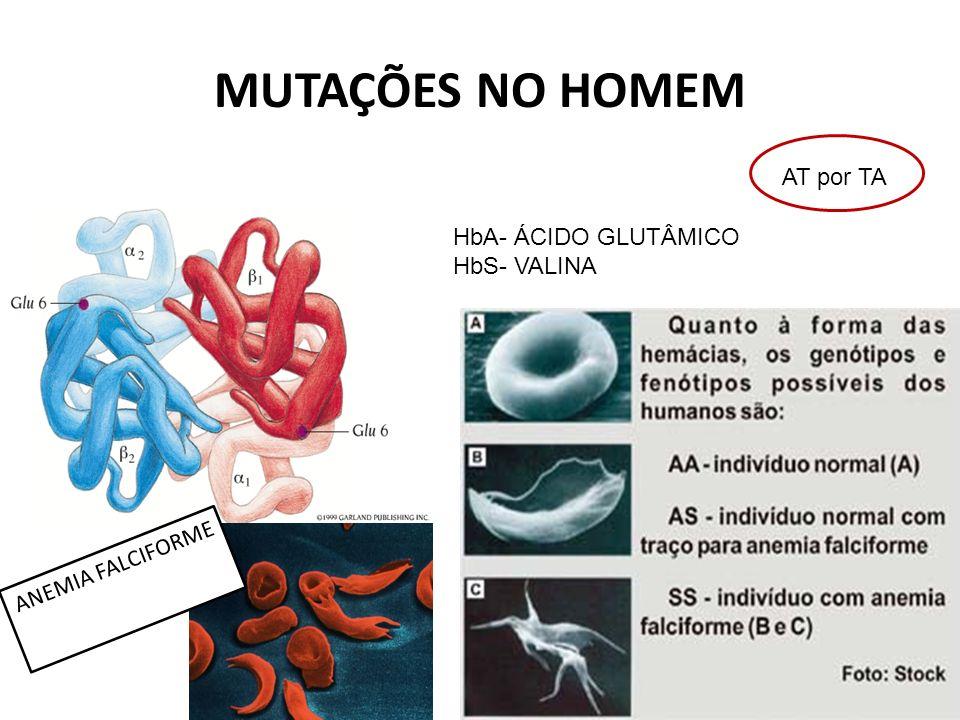 MUTAÇÕES NO HOMEM AT por TA HbA- ÁCIDO GLUTÂMICO HbS- VALINA