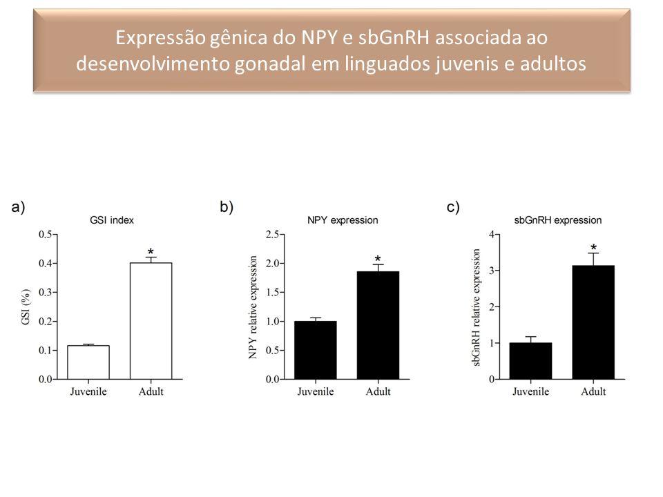 Expressão gênica do NPY e sbGnRH associada ao desenvolvimento gonadal em linguados juvenis e adultos