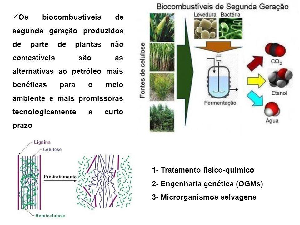 Os biocombustíveis de segunda geração produzidos de parte de plantas não comestíveis são as alternativas ao petróleo mais benéficas para o meio ambiente e mais promissoras tecnologicamente a curto prazo