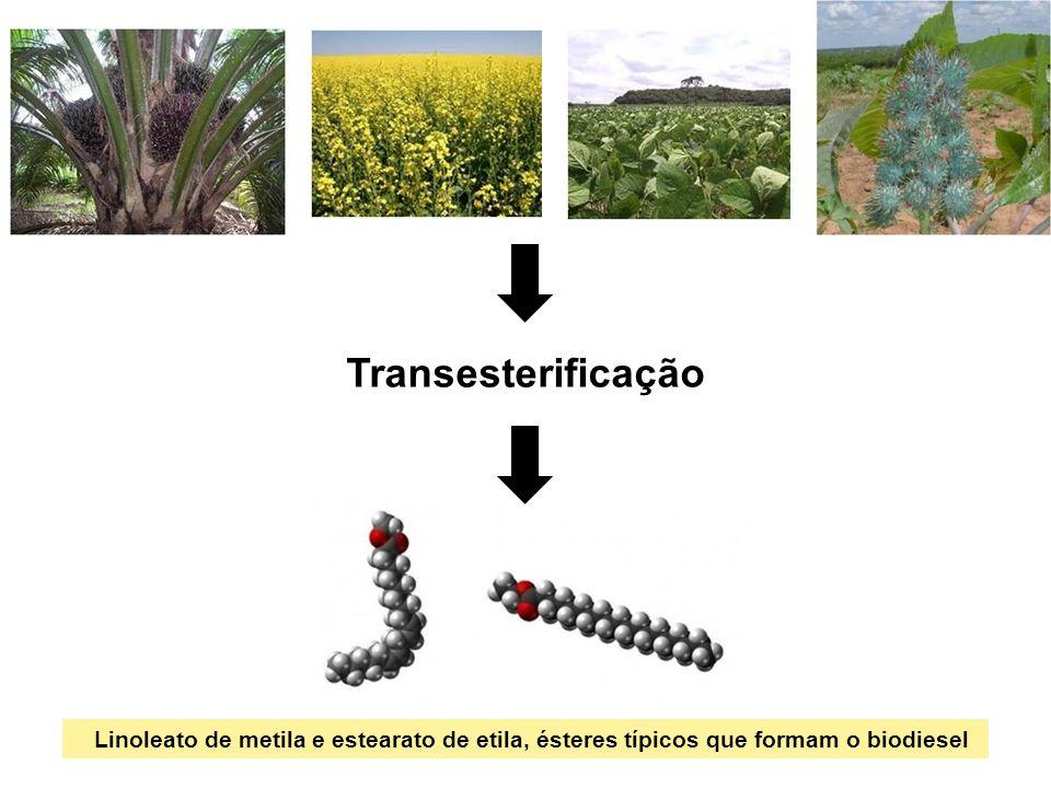 Transesterificação Linoleato de metila e estearato de etila, ésteres típicos que formam o biodiesel.