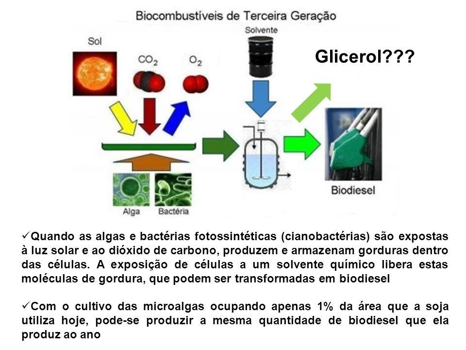 Glicerol