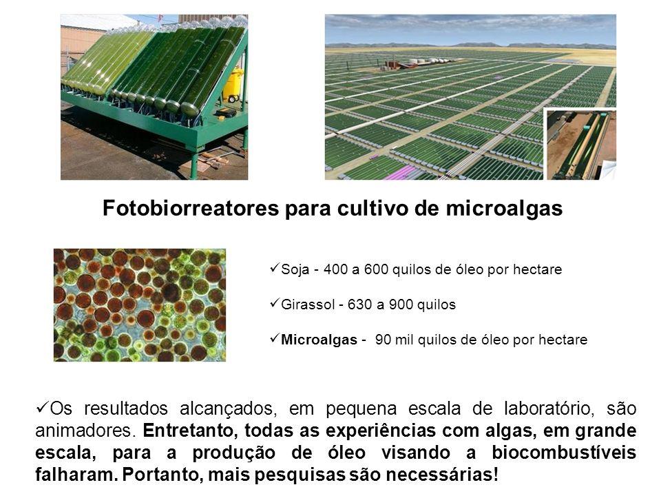 Fotobiorreatores para cultivo de microalgas