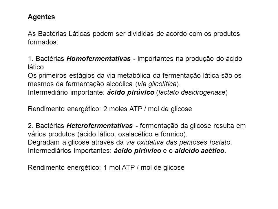 Agentes As Bactérias Láticas podem ser divididas de acordo com os produtos formados: