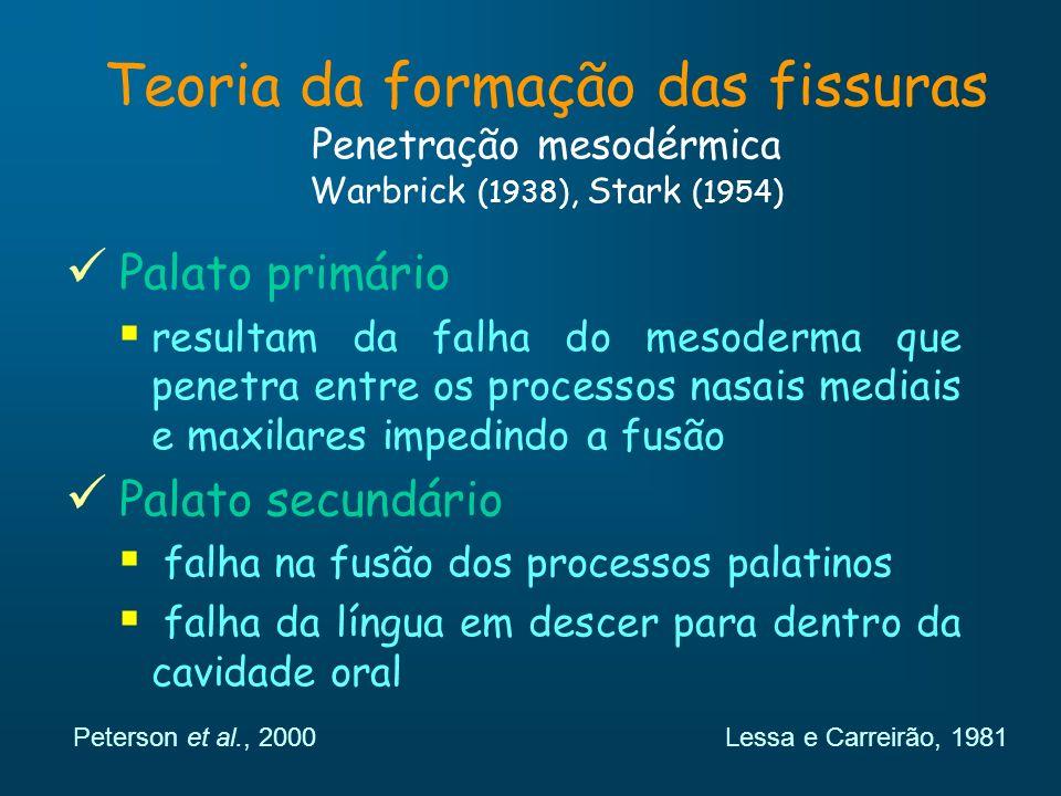 Teoria da formação das fissuras Penetração mesodérmica Warbrick (1938), Stark (1954)