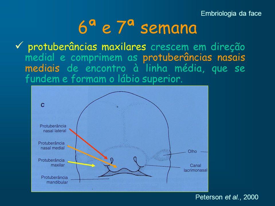 Embriologia da face 6ª e 7ª semana.