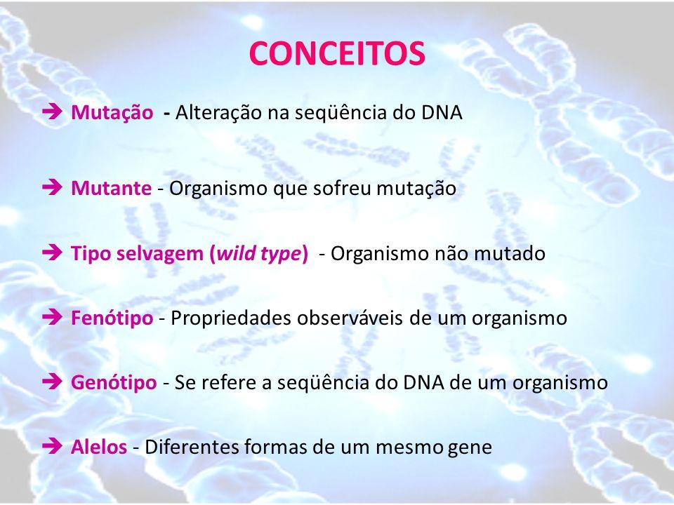 CONCEITOS Mutação - Alteração na seqüência do DNA