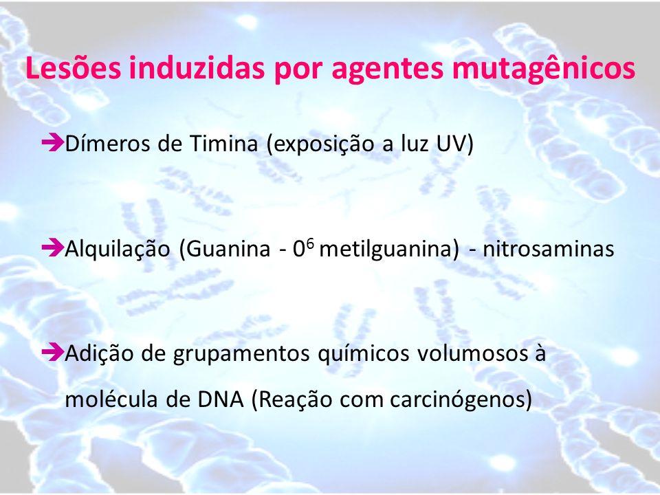 Lesões induzidas por agentes mutagênicos