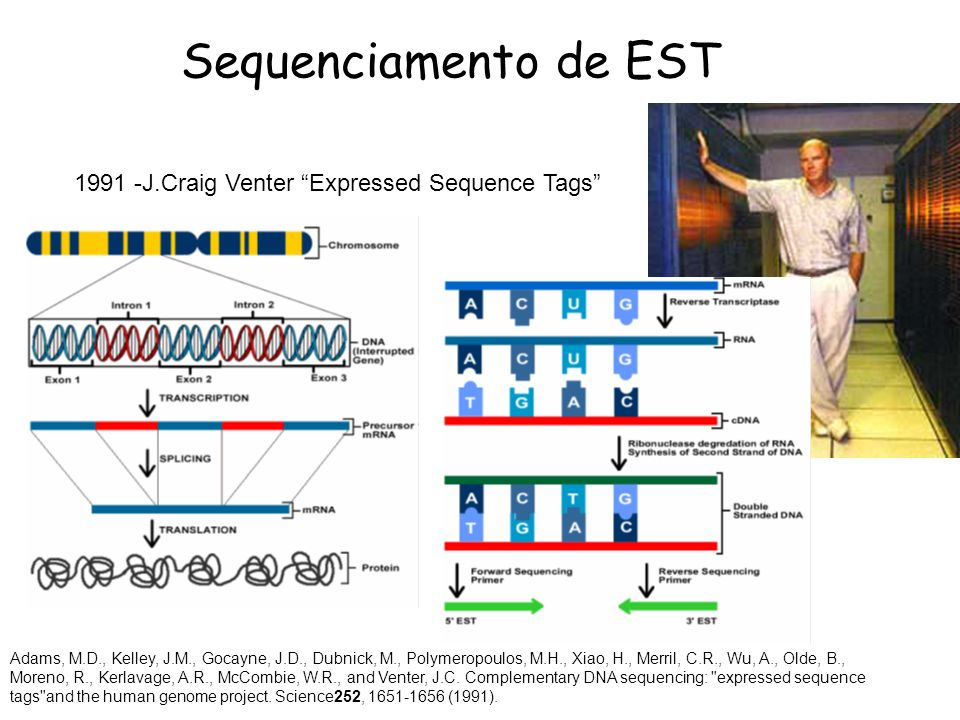 Sequenciamento de EST 1991 -J.Craig Venter Expressed Sequence Tags