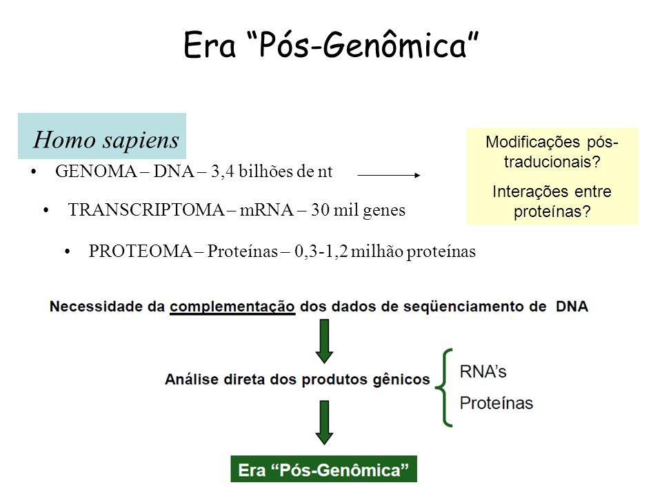 Era Pós-Genômica Homo sapiens GENOMA – DNA – 3,4 bilhões de nt