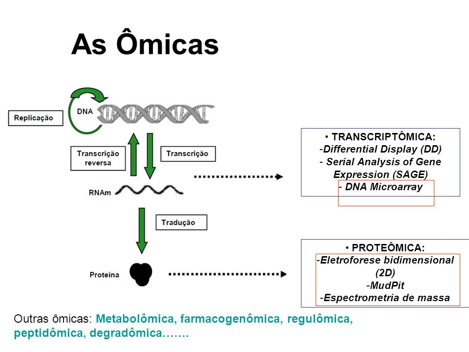 As Ômicas • TRANSCRIPTÔMICA: Differential Display (DD) - Serial Analysis of Gene Expression (SAGE)