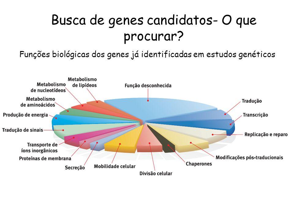 Funções biológicas dos genes já identificadas em estudos genéticos