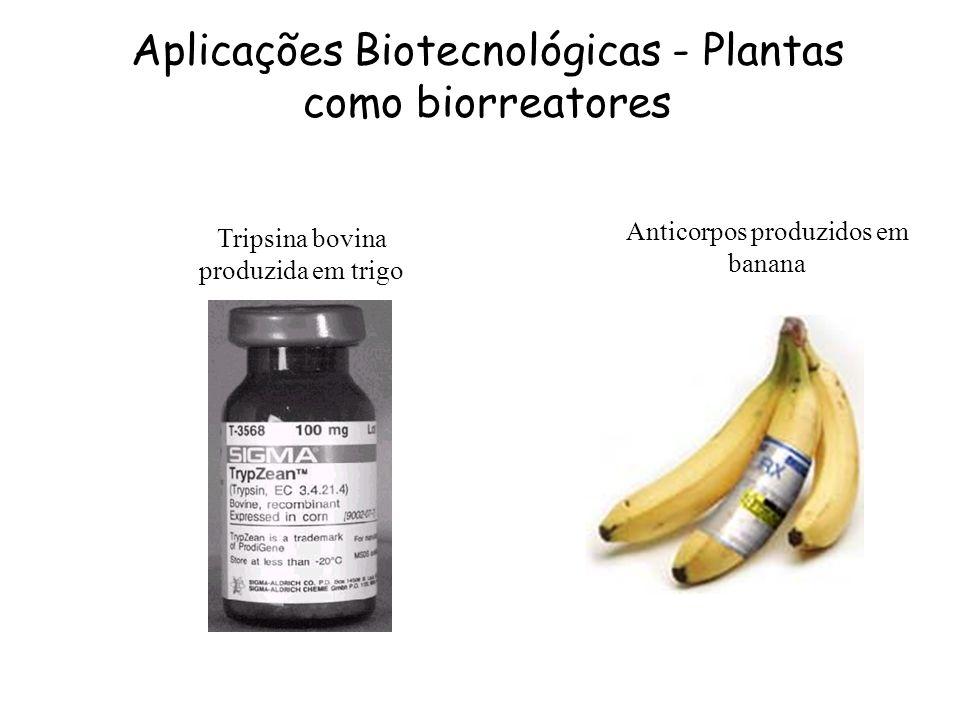 Aplicações Biotecnológicas - Plantas como biorreatores