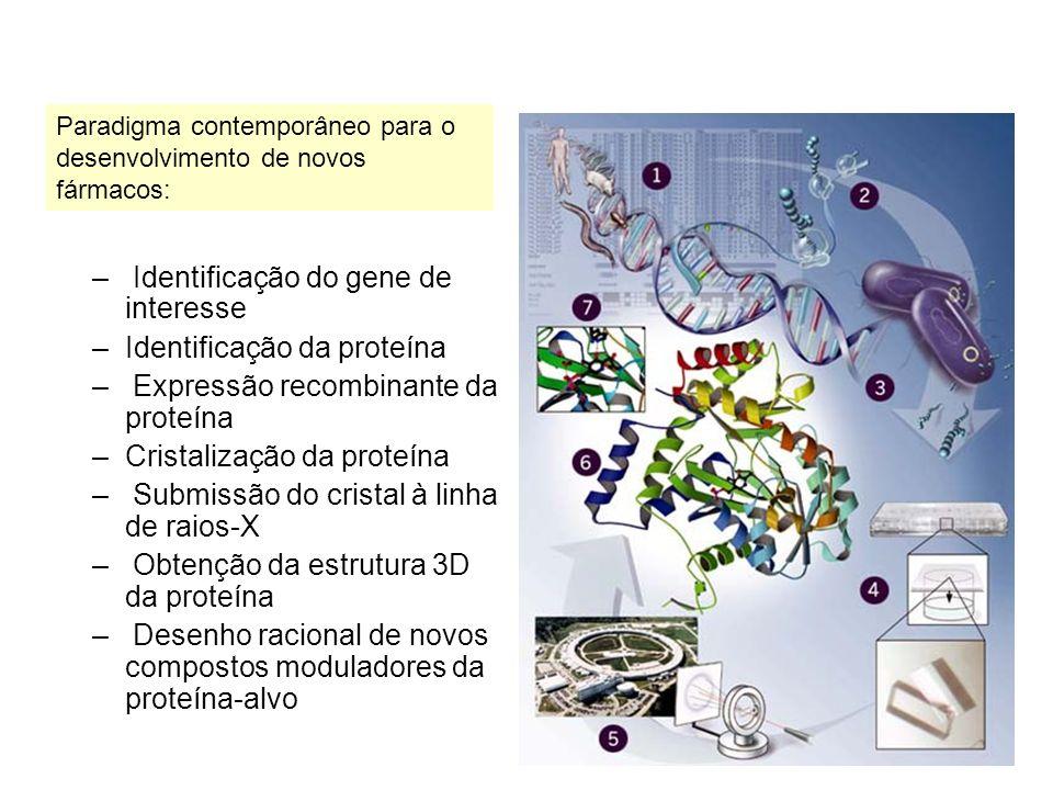 Identificação do gene de interesse Identificação da proteína