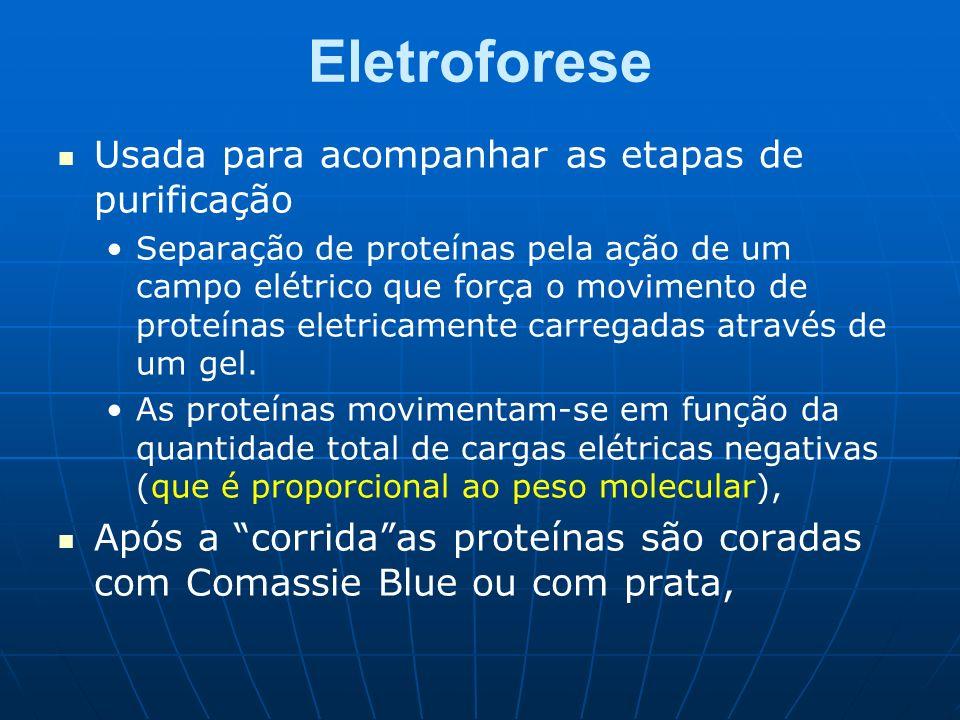 Eletroforese Usada para acompanhar as etapas de purificação