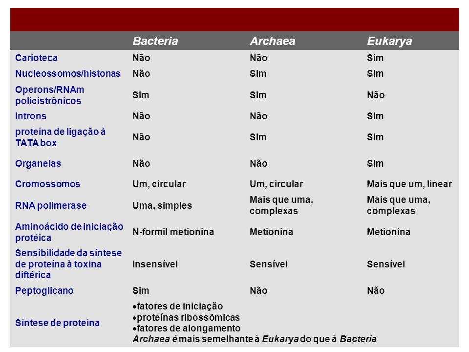 Bacteria Archaea Eukarya Carioteca Não Sim Nucleossomos/histonas SIm