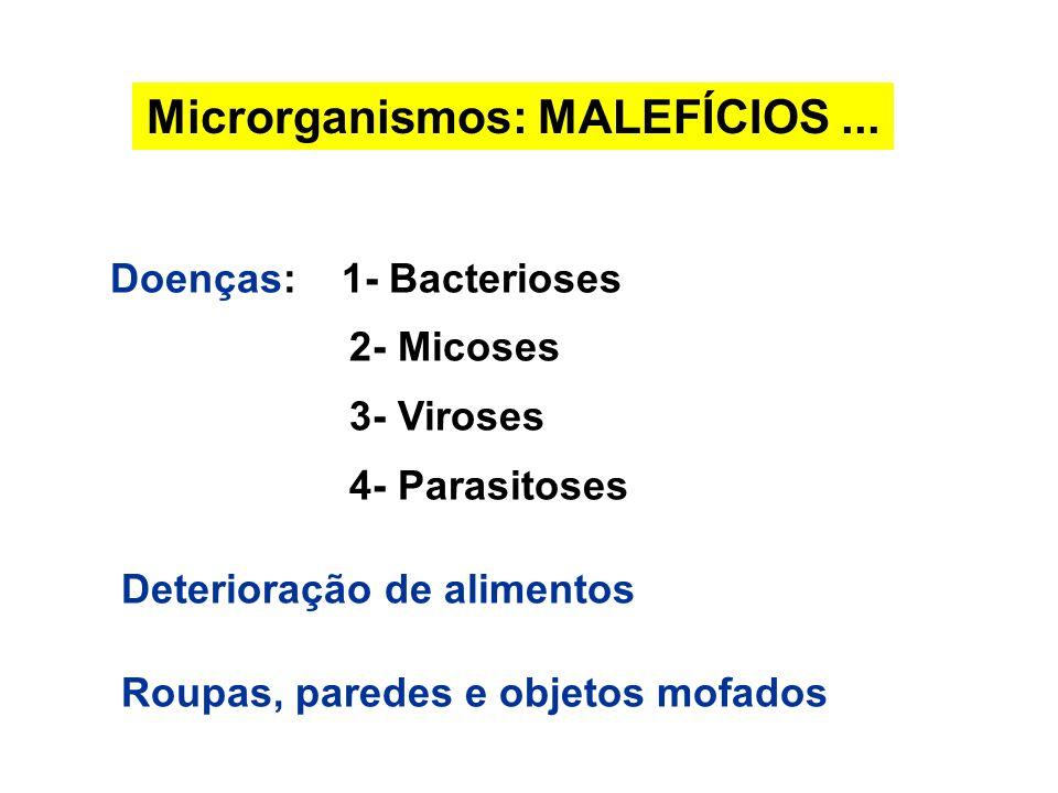 Microrganismos: MALEFÍCIOS ...