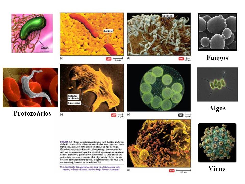 Fungos Algas Protozoários Vírus