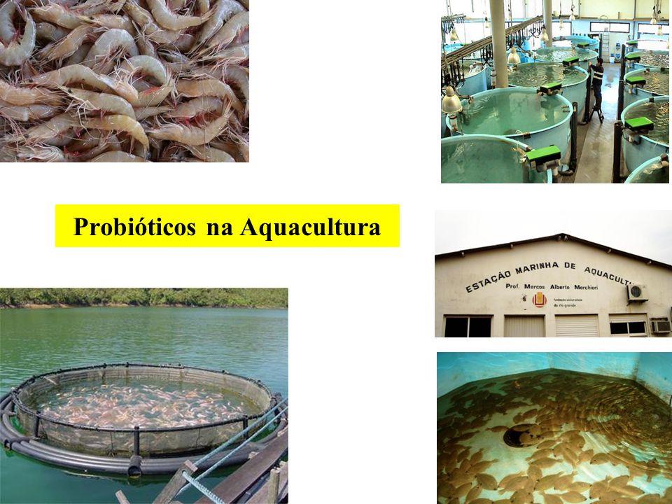 Probióticos na Aquacultura