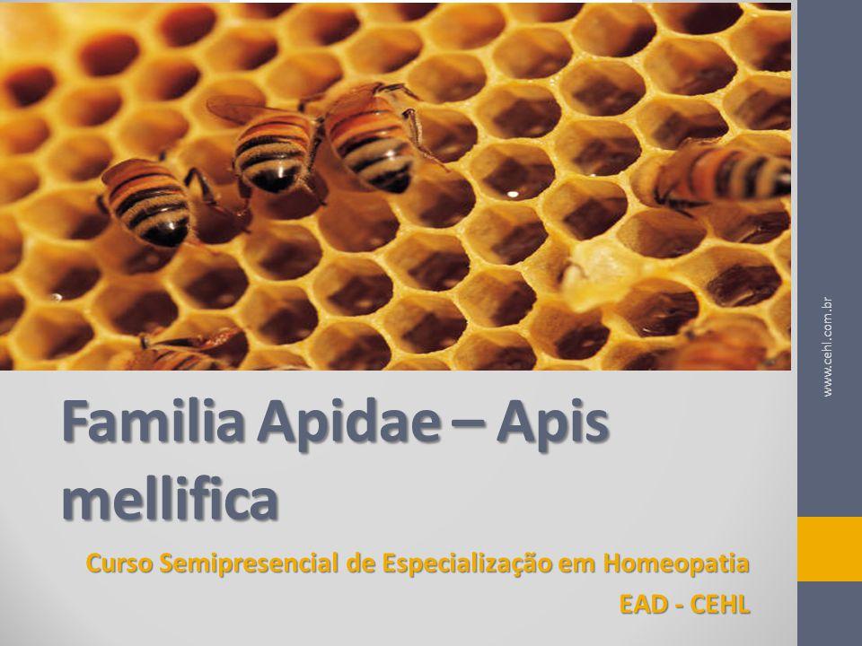 Familia Apidae – Apis mellifica
