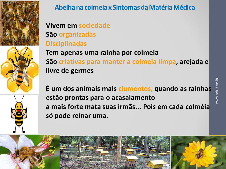 Abelha na colmeia x Sintomas da Matéria Médica