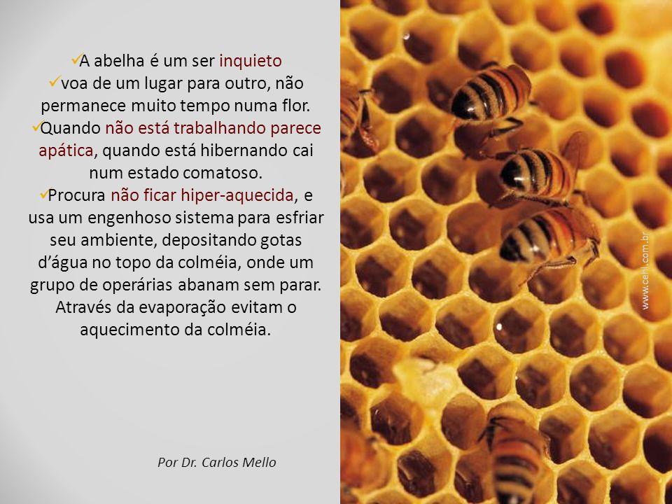 A abelha é um ser inquieto