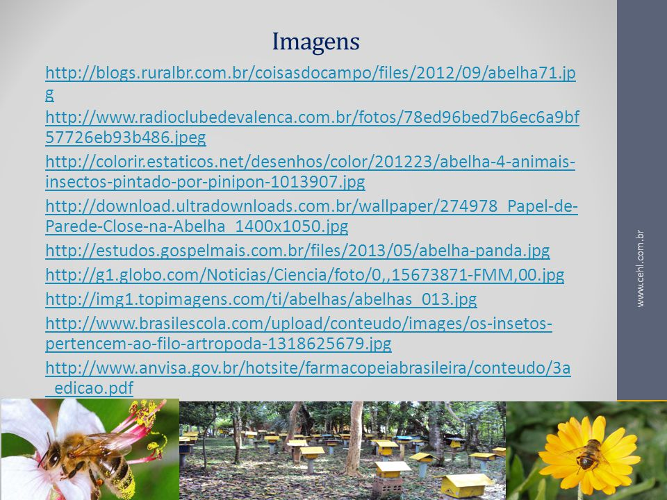 Imagens http://blogs.ruralbr.com.br/coisasdocampo/files/2012/09/abelha71.jpg.