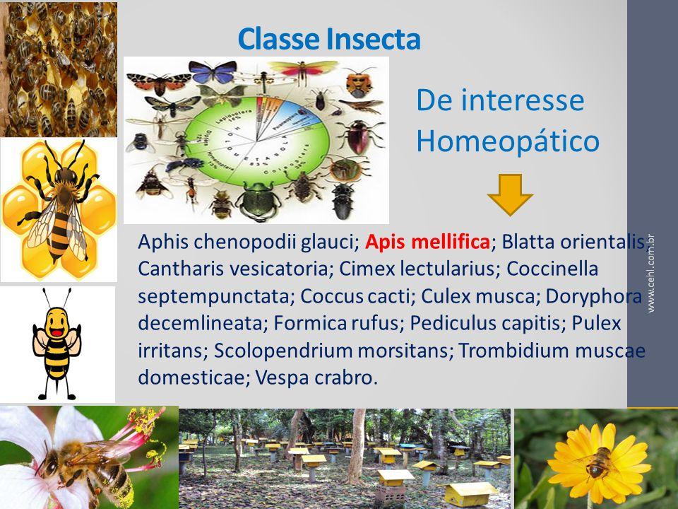 De interesse Homeopático