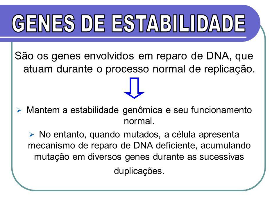 Mantem a estabilidade genômica e seu funcionamento normal.