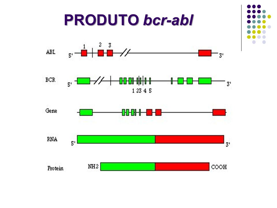 PRODUTO bcr-abl