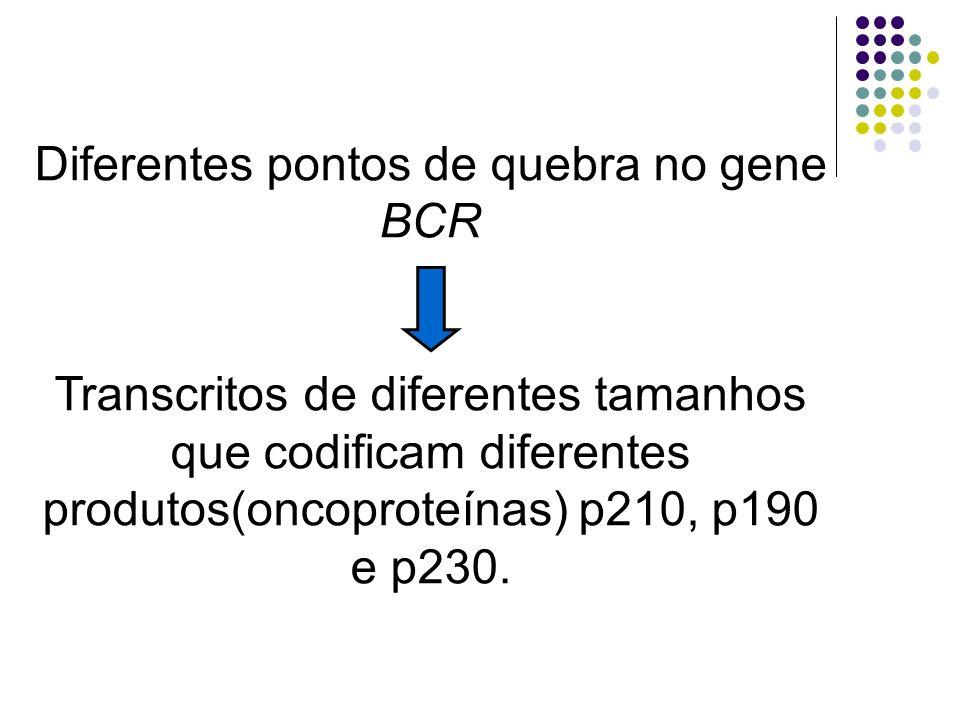 Diferentes pontos de quebra no gene BCR