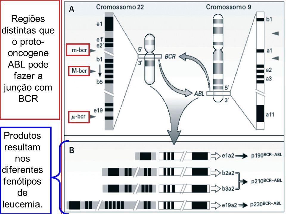 Regiões distintas que o proto-oncogene ABL pode