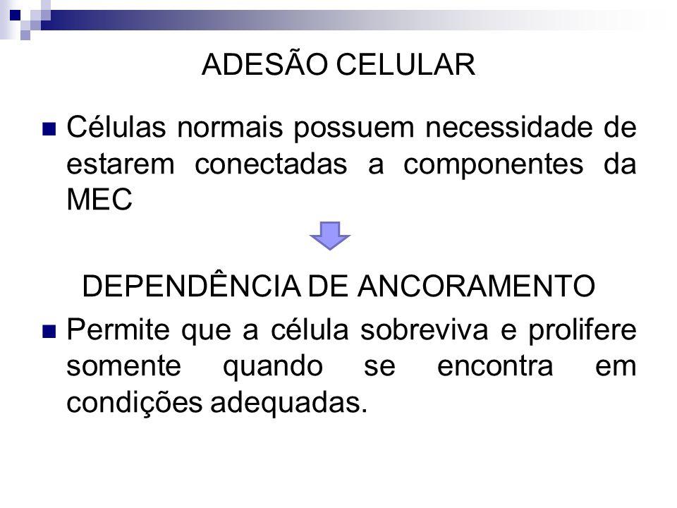 DEPENDÊNCIA DE ANCORAMENTO