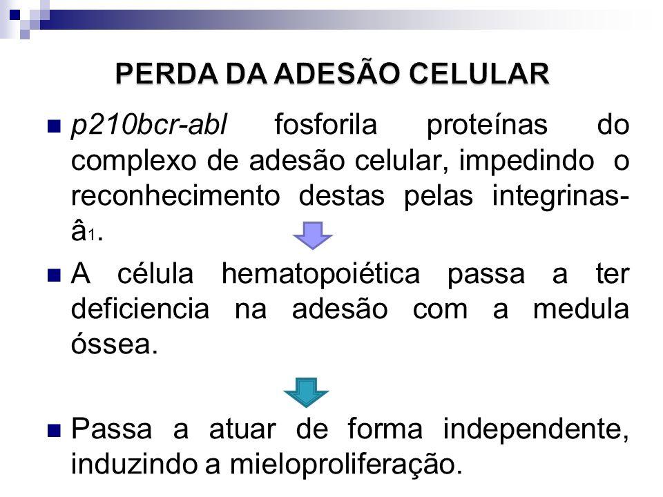 PERDA DA ADESÃO CELULAR