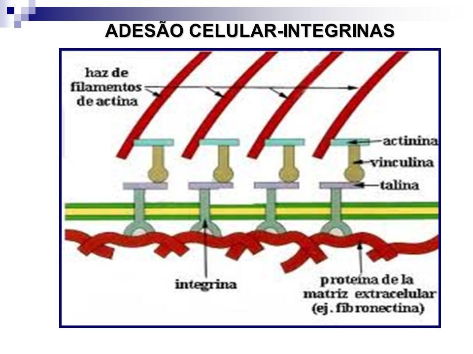 ADESÃO CELULAR-INTEGRINAS