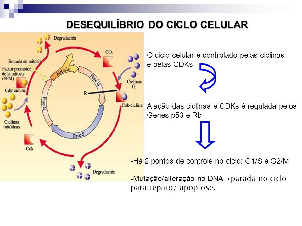 DESEQUILÍBRIO DO CICLO CELULAR