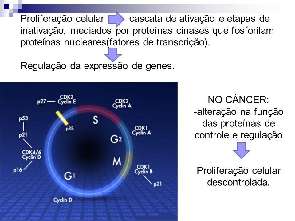 -alteração na função das proteínas de controle e regulação