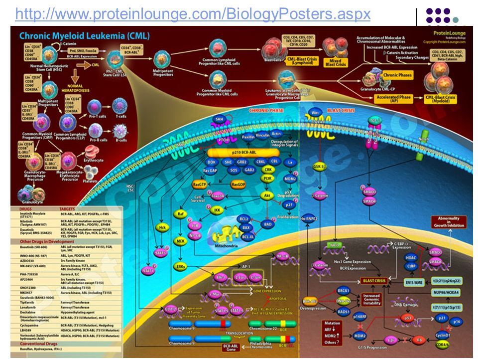 http://www.proteinlounge.com/BiologyPosters.aspx