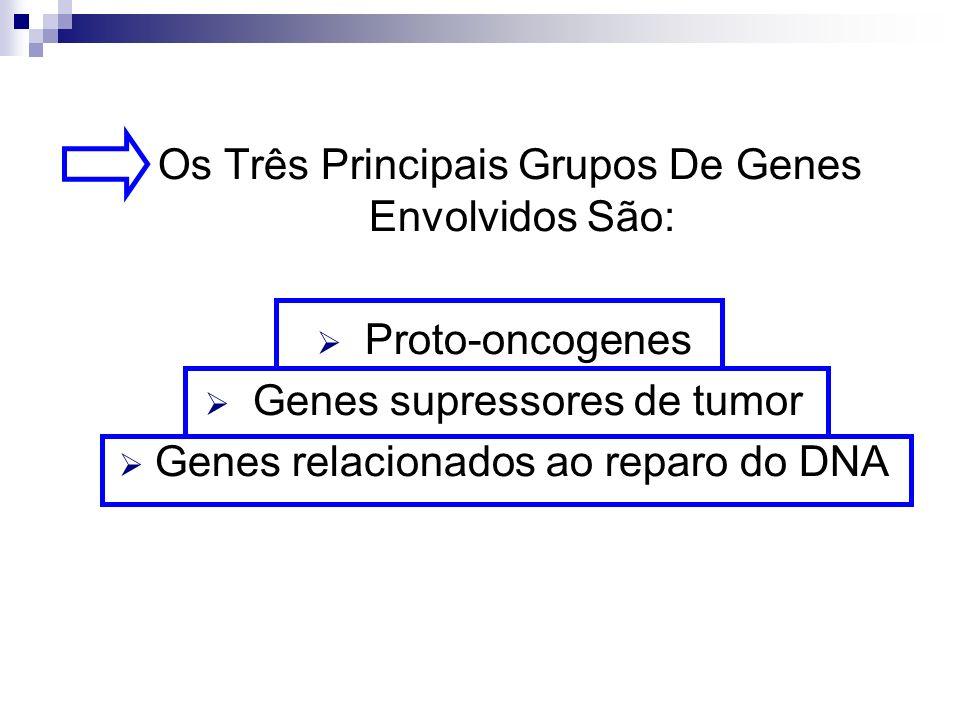 Os Três Principais Grupos De Genes Envolvidos São: