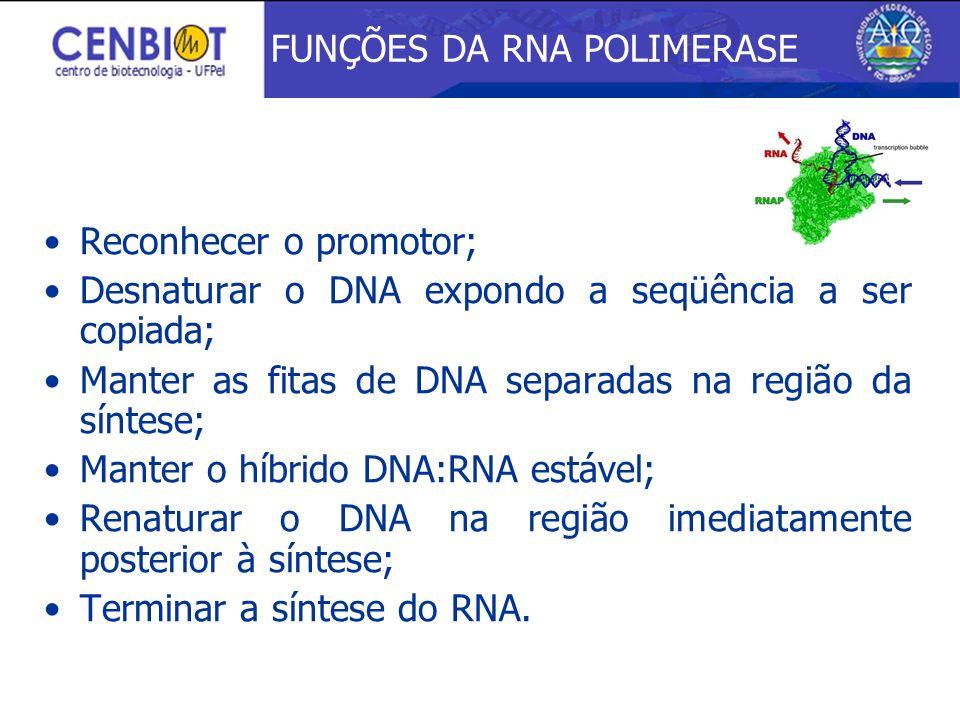 FUNÇÕES DA RNA POLIMERASE