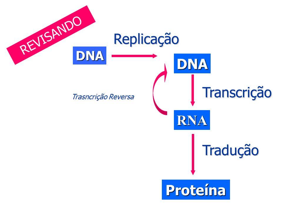Replicação Transcrição RNA Tradução Proteína REVISANDO DNA